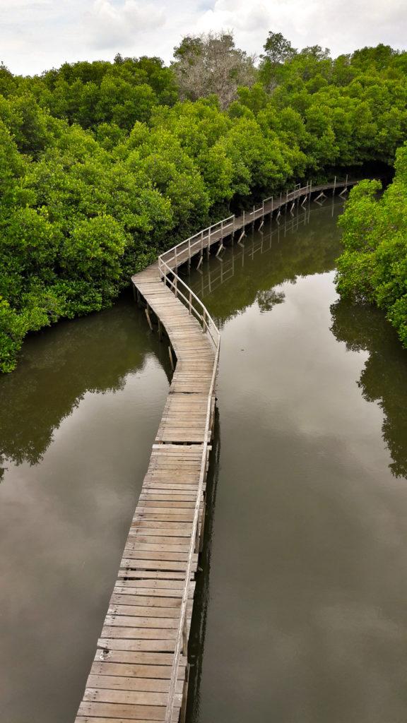 Мангровый Лес, Индонезия