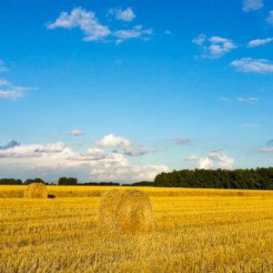 Рязань поле