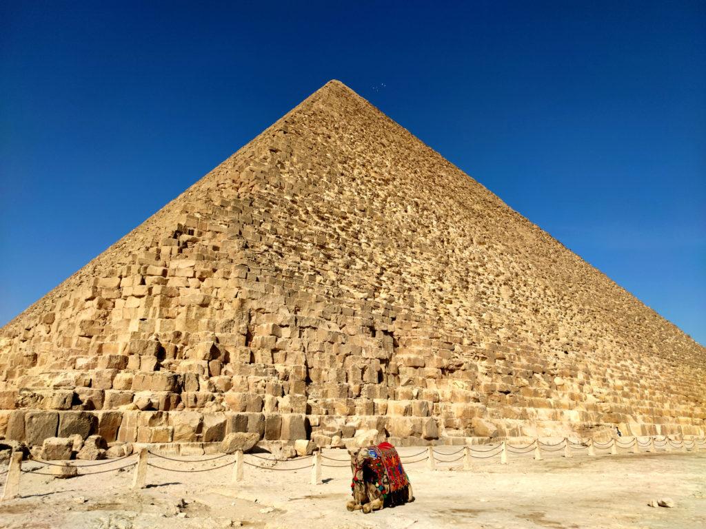 Верблюд у пирамид Гизы