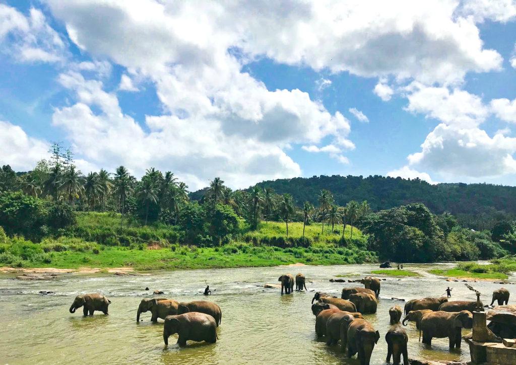 Слоны купаются