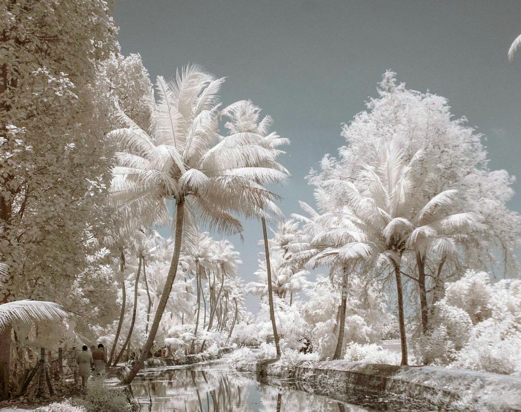 Снег на пальме