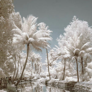 Снег на пальмах