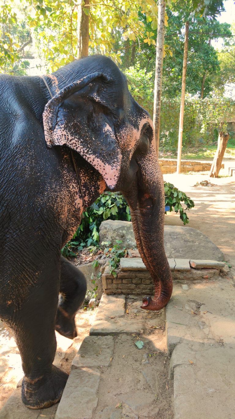 Пятнистый слон